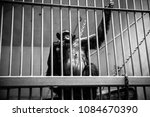 black and white photo of a...   Shutterstock . vector #1084670390