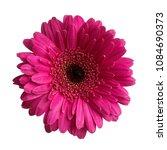gerbera daisy flower isolated... | Shutterstock . vector #1084690373