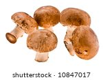 Fresh Crude Wood Mushrooms On ...