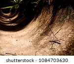 a stick bug | Shutterstock . vector #1084703630
