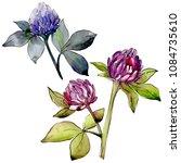 wildflower clover flower in a...   Shutterstock . vector #1084735610