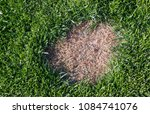 lawn has suffered damage from a ... | Shutterstock . vector #1084741076