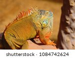 close up portrait of a male... | Shutterstock . vector #1084742624