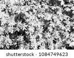 little white flowers in the... | Shutterstock . vector #1084749623