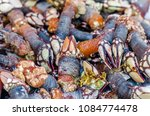 goose barnacles at a seafood... | Shutterstock . vector #1084774478
