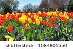 vivid color of springtime...   Shutterstock . vector #1084801550