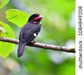 beautiful black bird  dusky...   Shutterstock . vector #1084849208