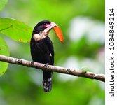 beautiful black bird  dusky...   Shutterstock . vector #1084849214