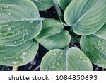 green plants after rainstorm | Shutterstock . vector #1084850693