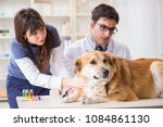 Small photo of Doctor and assistant checking up golden retriever dog in vet cli
