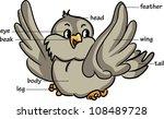 Cartoon Bird. Vocabulary Of...