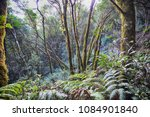 trees  grass and fern forest in ... | Shutterstock . vector #1084901840