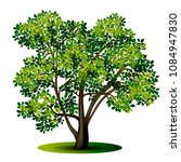 detached tree with green leaves ... | Shutterstock .eps vector #1084947830