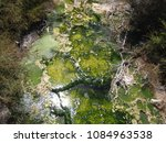 Small photo of Green algal slime found in stream coming from hot spring overflow.