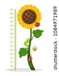 meter wall with sunflower...   Shutterstock .eps vector #1084971989