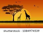 giraffe silhouette in sunset at ... | Shutterstock .eps vector #1084974539
