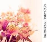 Pink Alstroemeria Isolated On...