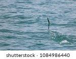 sailfish jumping on the sea... | Shutterstock . vector #1084986440