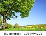 old maple tree on meadow.... | Shutterstock . vector #1084994228