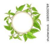 nettle vector frame | Shutterstock .eps vector #1085000789
