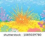 funny long spine sea urchin... | Shutterstock .eps vector #1085039780