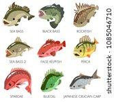 fish vector sea bass black bass ...   Shutterstock .eps vector #1085046710