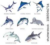 Fish Vector Seafood Broadbill...