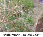 Small photo of branch branch branch