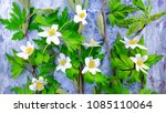 flowers for the mother s day... | Shutterstock . vector #1085110064