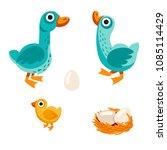 farm birds family cartoon flat... | Shutterstock .eps vector #1085114429