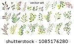 vector illustration. botanical... | Shutterstock .eps vector #1085176280