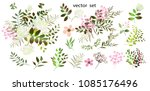 vector drawing  botanical... | Shutterstock .eps vector #1085176496