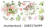 vector drawing.  botanical... | Shutterstock .eps vector #1085176499
