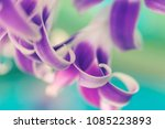 leaf of an orchid   macro photo ... | Shutterstock . vector #1085223893