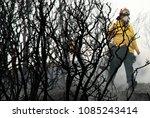 firefighters work to extinguish ... | Shutterstock . vector #1085243414