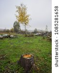 Small photo of DEFORESTATION, DESTRUCTION AND CUTTING OF TREE IN FORESTS. ENVIRONMENTAL POLLUTION. UKRAINE. EUROPE.