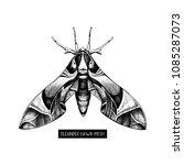 oleander hawk moth drawing... | Shutterstock .eps vector #1085287073