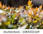 Hairstreak Butterfly Sitting In ...