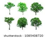 shrubs beautiful bush isolated  ... | Shutterstock . vector #1085408720