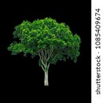 shrubs beautiful bush isolated  ... | Shutterstock . vector #1085409674