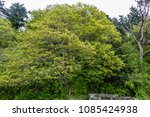 trees are vibrant with life in... | Shutterstock . vector #1085424938