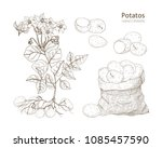 elegant monochrome botanical...   Shutterstock .eps vector #1085457590