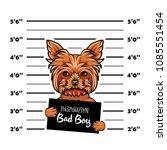 dog yorkshire terrier prisoner  ... | Shutterstock .eps vector #1085551454
