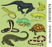 set of reptiles and amphibians. ... | Shutterstock .eps vector #1085580878