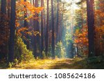 Autumn Forest Scene. Vivid...