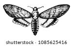 butterfly or wild moth insect.... | Shutterstock .eps vector #1085625416
