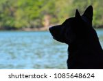 Stock photo black dog silhouette by lake 1085648624