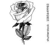 wildflower rose in a vector... | Shutterstock .eps vector #1085649983