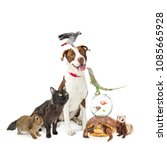 group of domestic pets together.... | Shutterstock . vector #1085665928