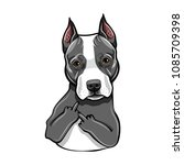 staffordshire terrier dog.... | Shutterstock .eps vector #1085709398